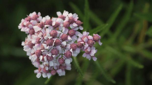 Flower by Lake Saroma